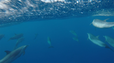 So many dolphins though!