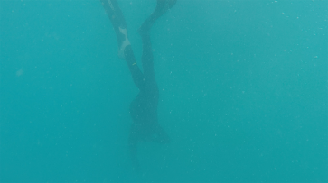 Searching for the invisible coral pillars