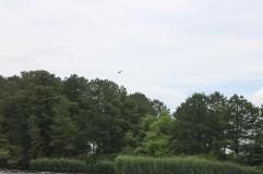 Big bird! Wildlife!